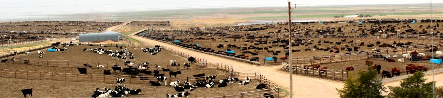 Stock yard outside of Dodge City